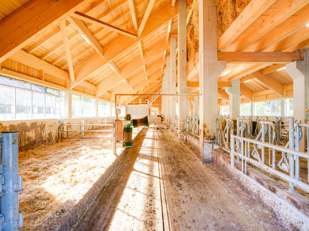 Modernster Stall für exzellentes Bio Rindfleisch